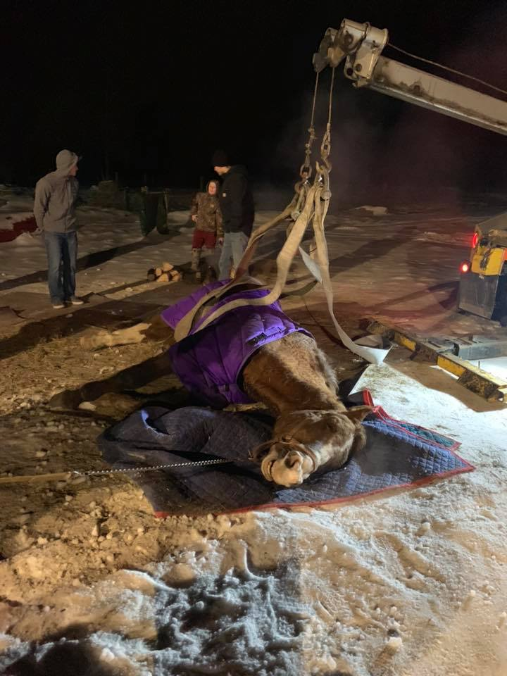 Hometown Firefighters Perform Emergency Horse Rescue