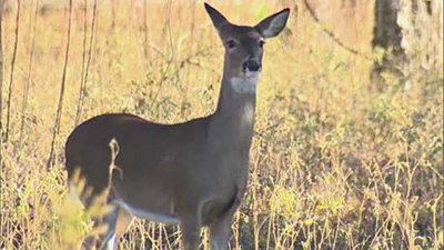 Hunters in Pennsylvania, Becareful of 'Zombie Deer Disease'